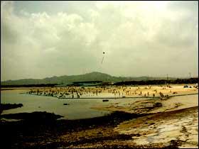 beach008.jpg